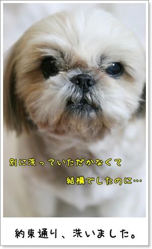 2009_0401_191852AA.jpg