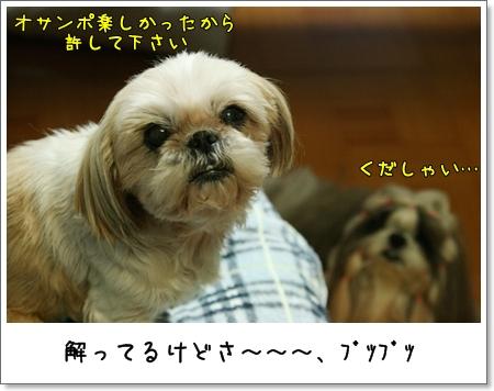2009_0409_192757AA.jpg
