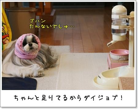 2009_0410_064016AA.jpg