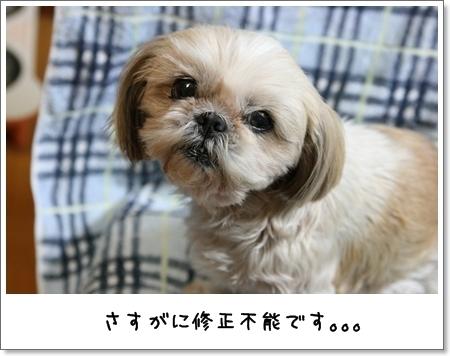 2009_0410_193409AA.jpg