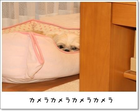 2009_0411_180811AA.jpg