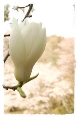 2009_0412_145308AA.jpg