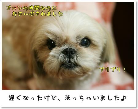 2009_0415_194236AA.jpg