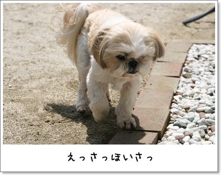 2009_0419_120339AA.jpg