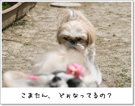 2009_0419_120407AA.jpg