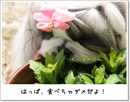 2009_0419_120445AA.jpg