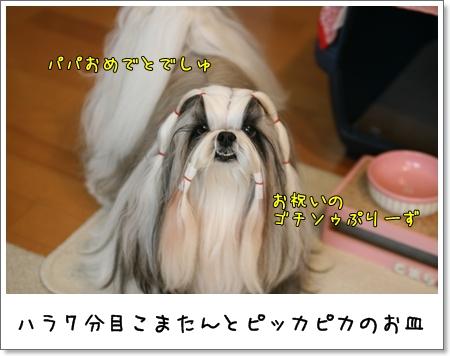 2009_0420_073511AA.jpg