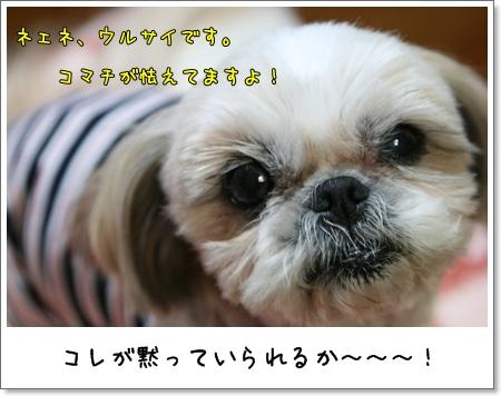 2009_0421_193134AA.jpg