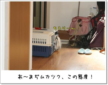 2009_0422_073411AA.jpg