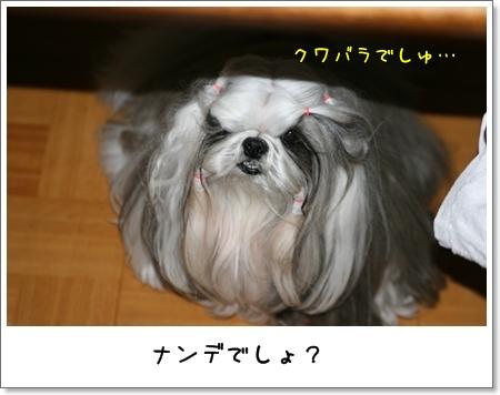 2009_0422_191808AA.jpg