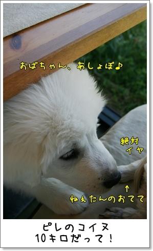 2009_0426_142118AB.jpg