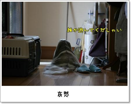 2009_0430_101157AA.jpg