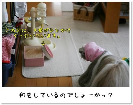2009_0503_084030AA.jpg