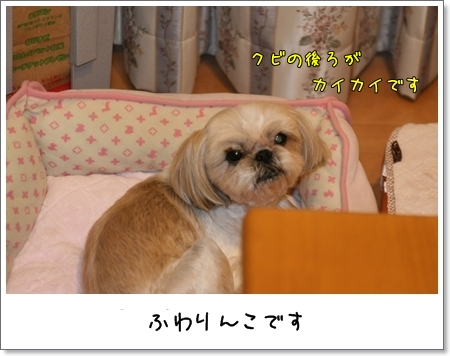 2009_0509_190648AA.jpg