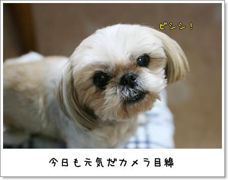 2009_0518_193005AA.jpg