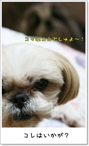2009_0520_193343AA.jpg