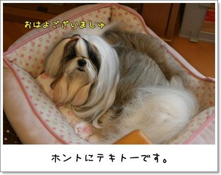 2009_0522_061925AA.jpg