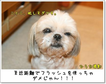 2009_0523_194352AA.jpg