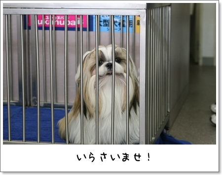 2009_0524_122200AA.jpg