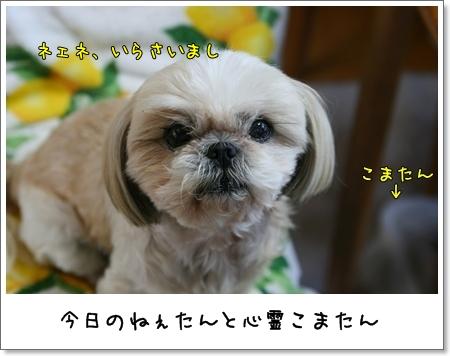 2009_0601_180554AA.jpg