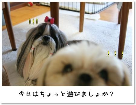 2009_0601_183421AA.jpg