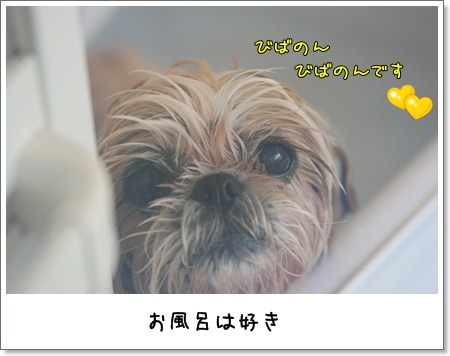 2009_0606_121220AA.jpg