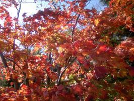 冬の準備 紅葉