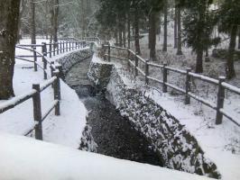 北海道神宮 雪の舞う川
