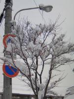 雪が積もった木々