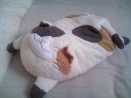 湯たんぽ 猫