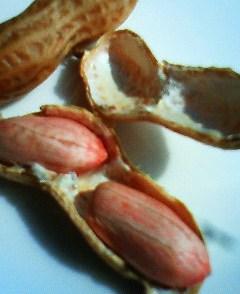 20081021ゆでピーナッツ