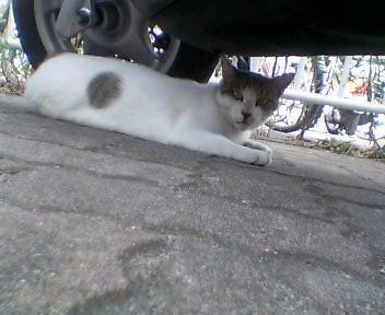 boxcat1.jpg