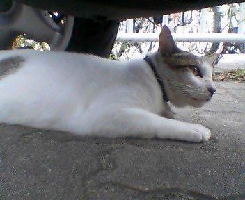 boxcat2.jpg