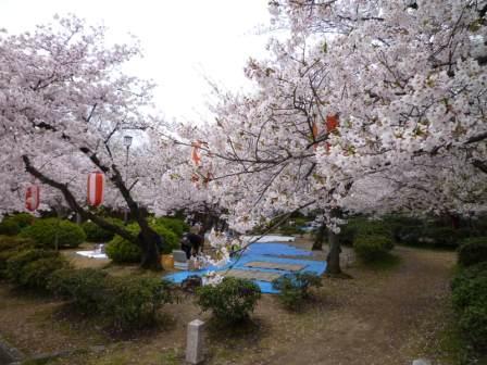 岡電器サービスパナットおか和歌山岩出和歌山城桜お花見リフォーム見積り