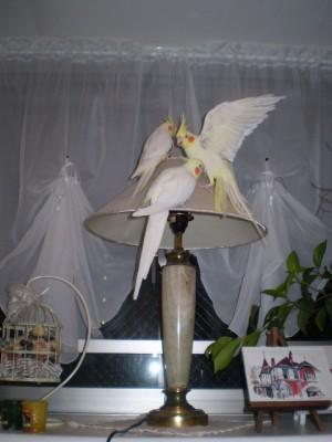 2006.9月~ 387
