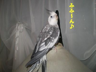 2006.9月~ 944