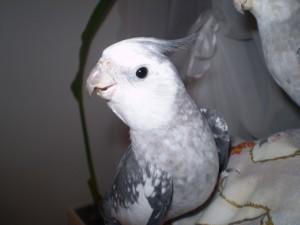 2006.9月~ 1029