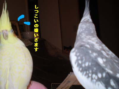 2006.9月~ 1302