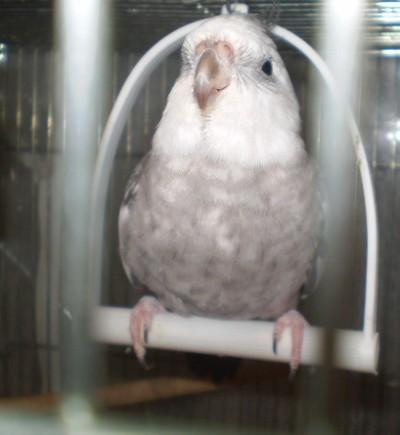 2006.9月~ 1493