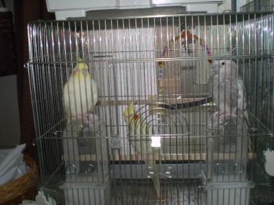 2006.9月~ 1771