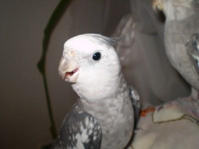 2006.9月~ 1027