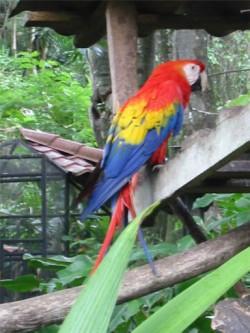 macawl.jpg