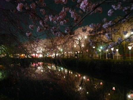 三島大社 夜桜