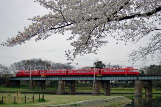桜とパノラマカー