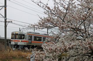 桜と313系