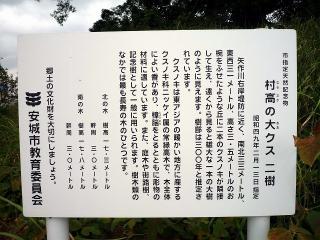 村高の大クス(二樹)