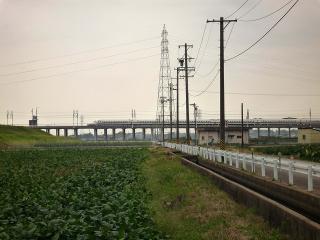 村高の大クス(二樹)より新幹線を見る