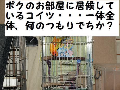 8ちゃん寝床3