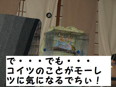 8ちゃん寝床4