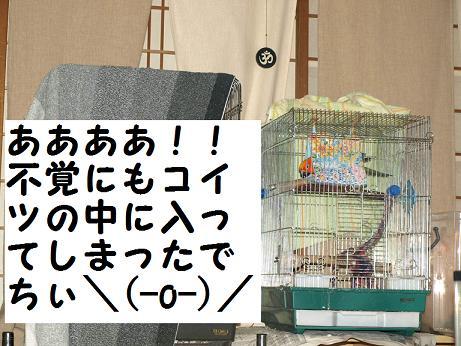 8ちゃん寝床5